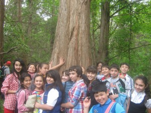 Дерево жизни и здоровья